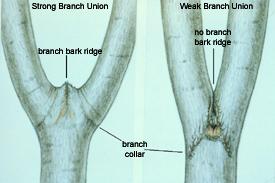 stem union comparison
