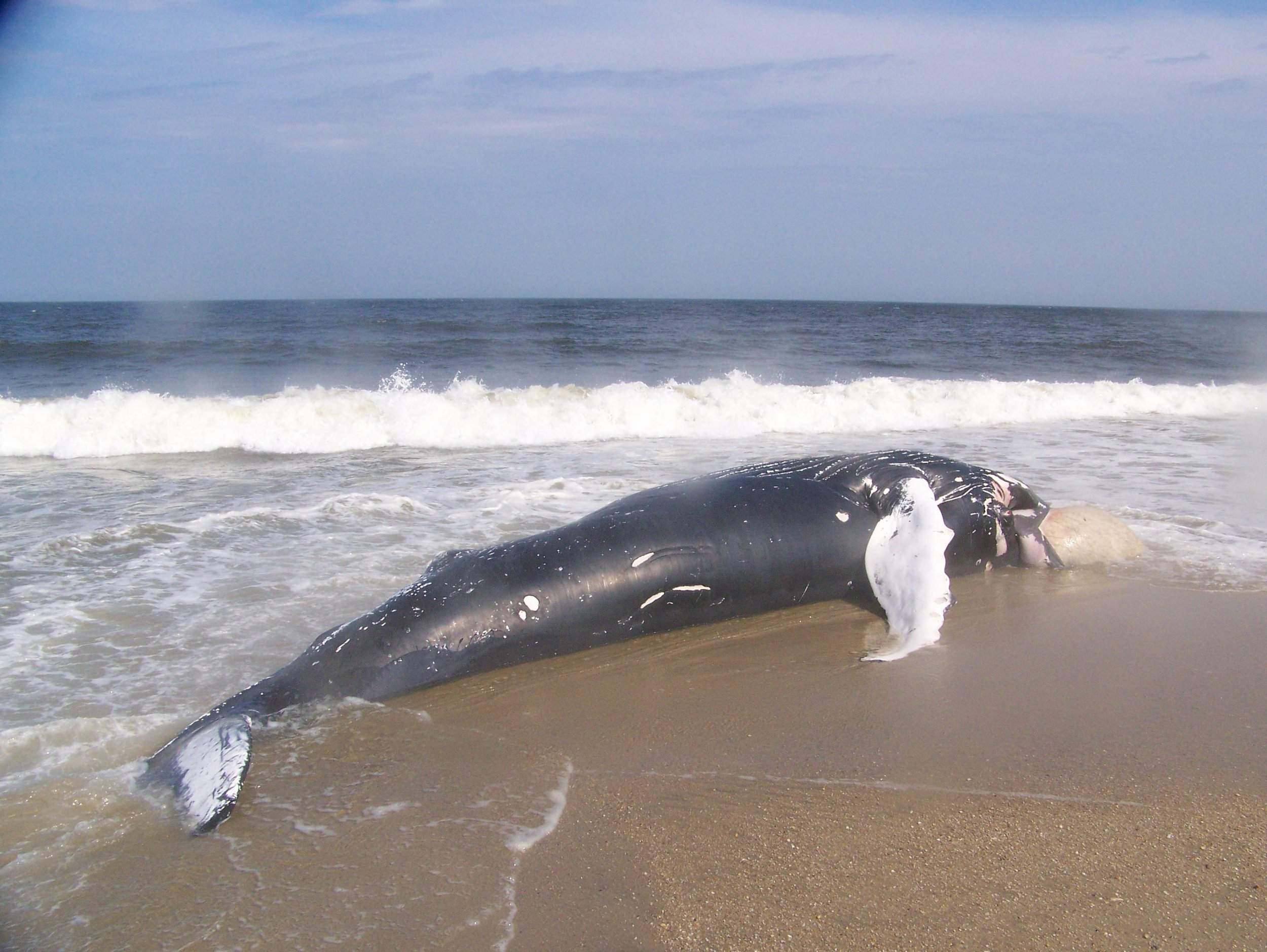 Help Whales and Sea Turtles from ship strikes! -