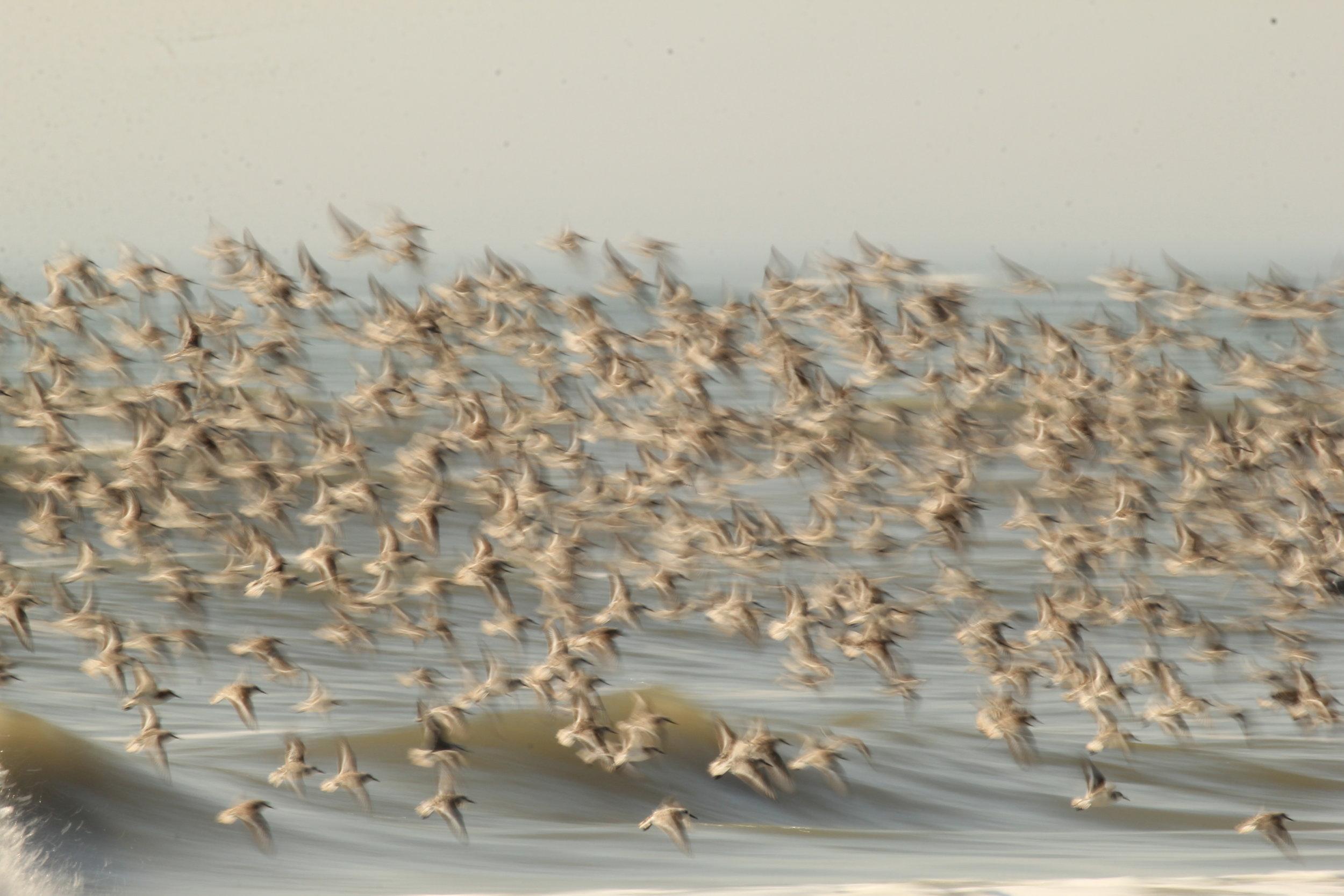 - B. Identify, track and create a local baseline for seabird, migratory coastal bird or coastal bird populations.