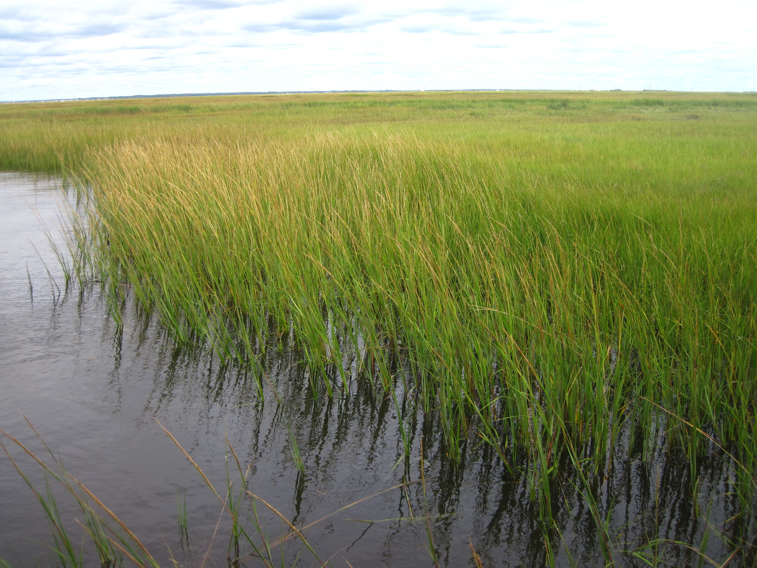 - H. Wetland mapping. Study, identify, and describe how wetland species and habitat changes over time, either seasonally or longer; and explain the implications for organisms.