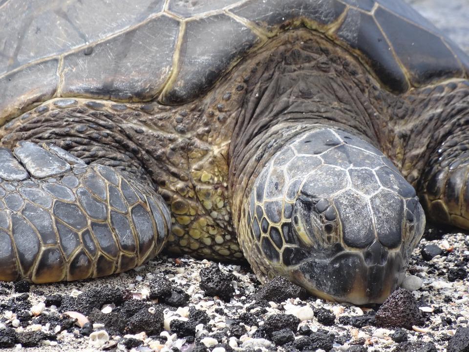 turtle-404065_960_720.jpg