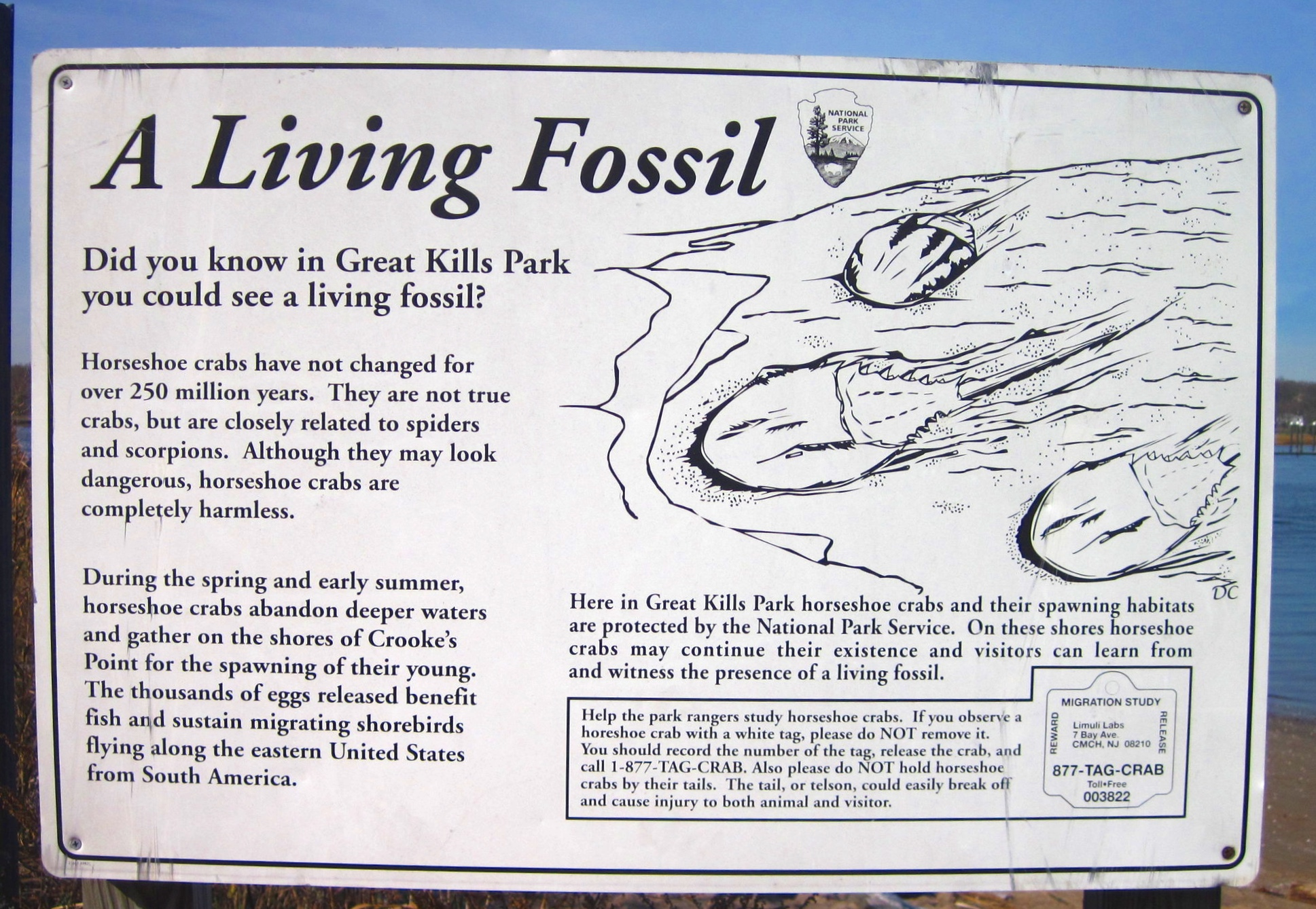 A Horseshoe Crab sign in Great Kills Park on Staten Island, New York City.