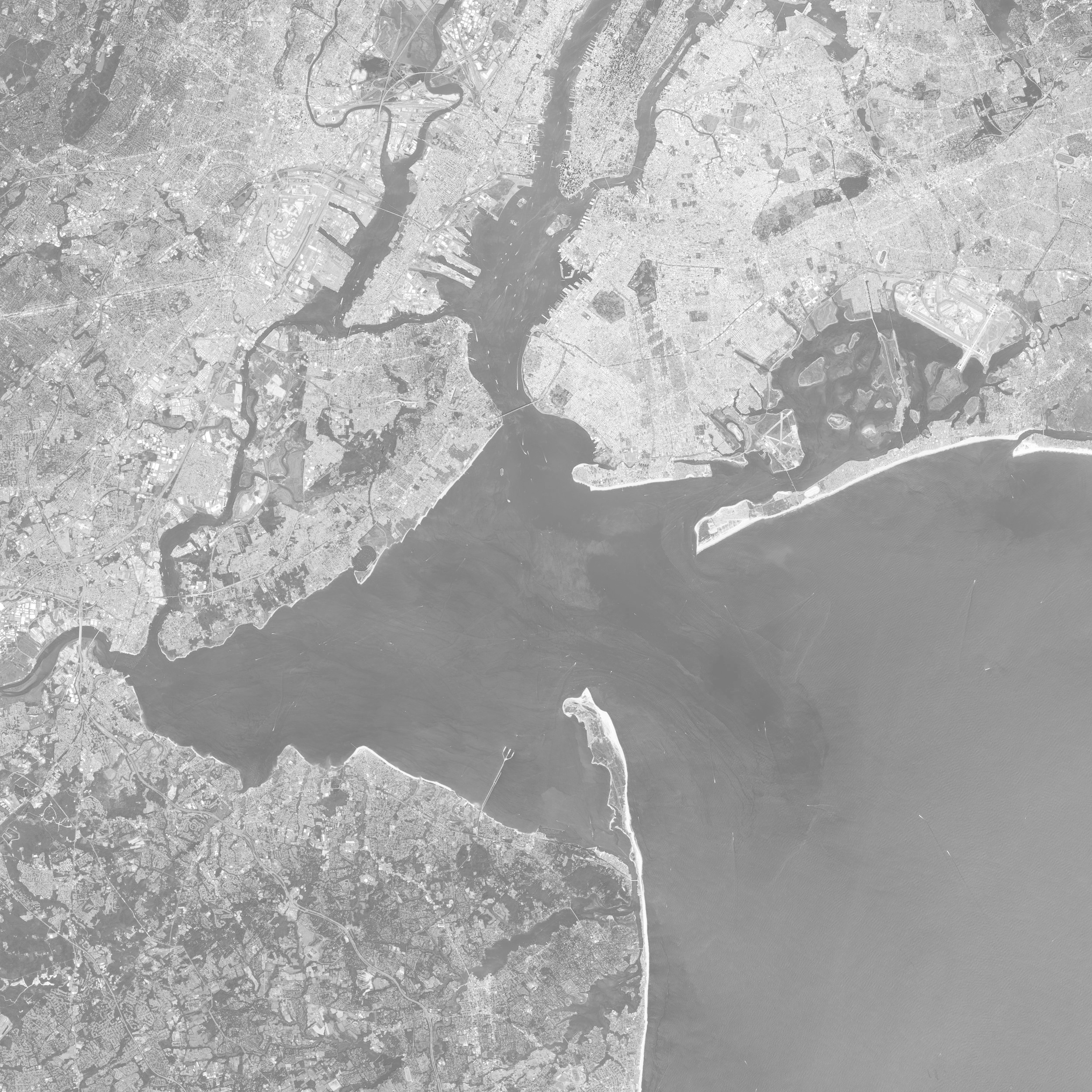 It's not easy being a horseshoe crab around New York Harbor! -