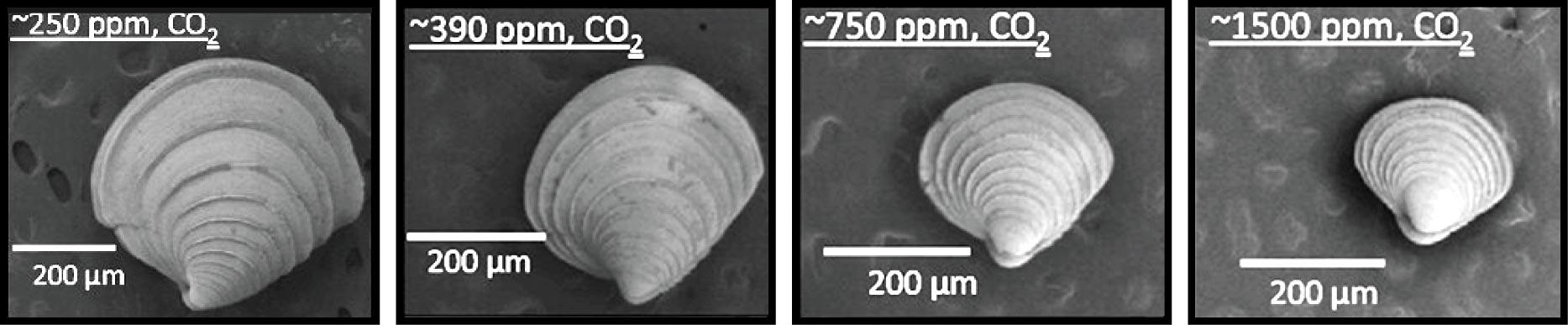 f11-clams-hi.jpg