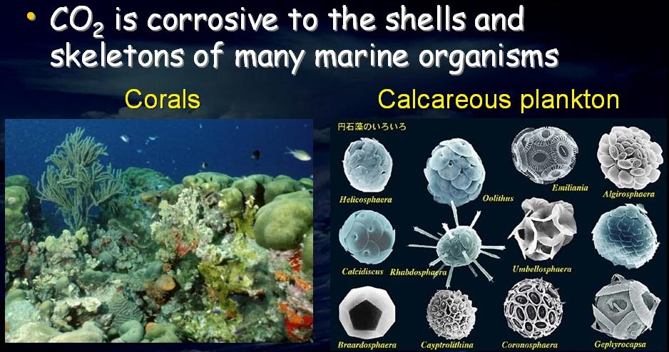 corals_plankton.jpg