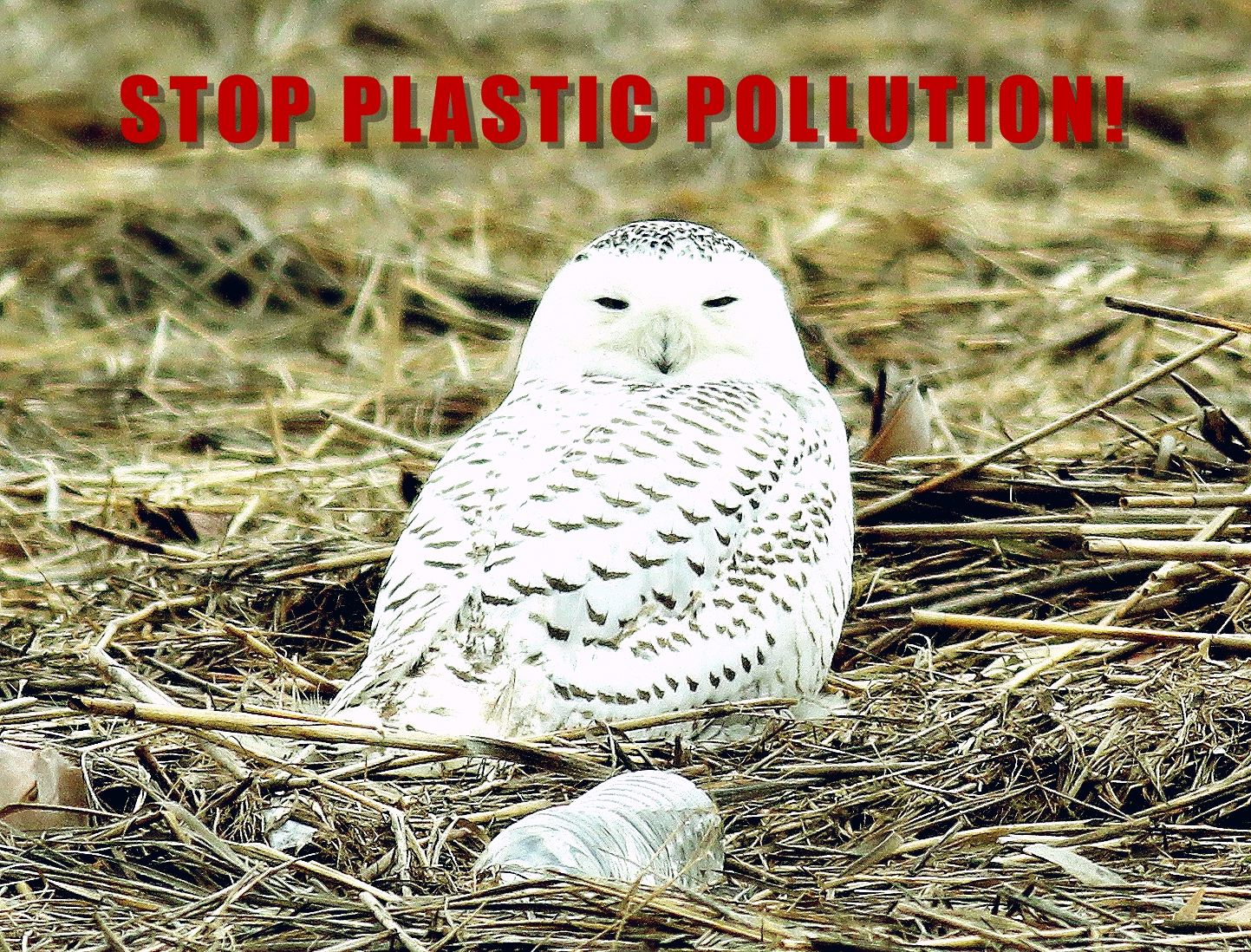 STOP PLASTIC POLLUTION! -