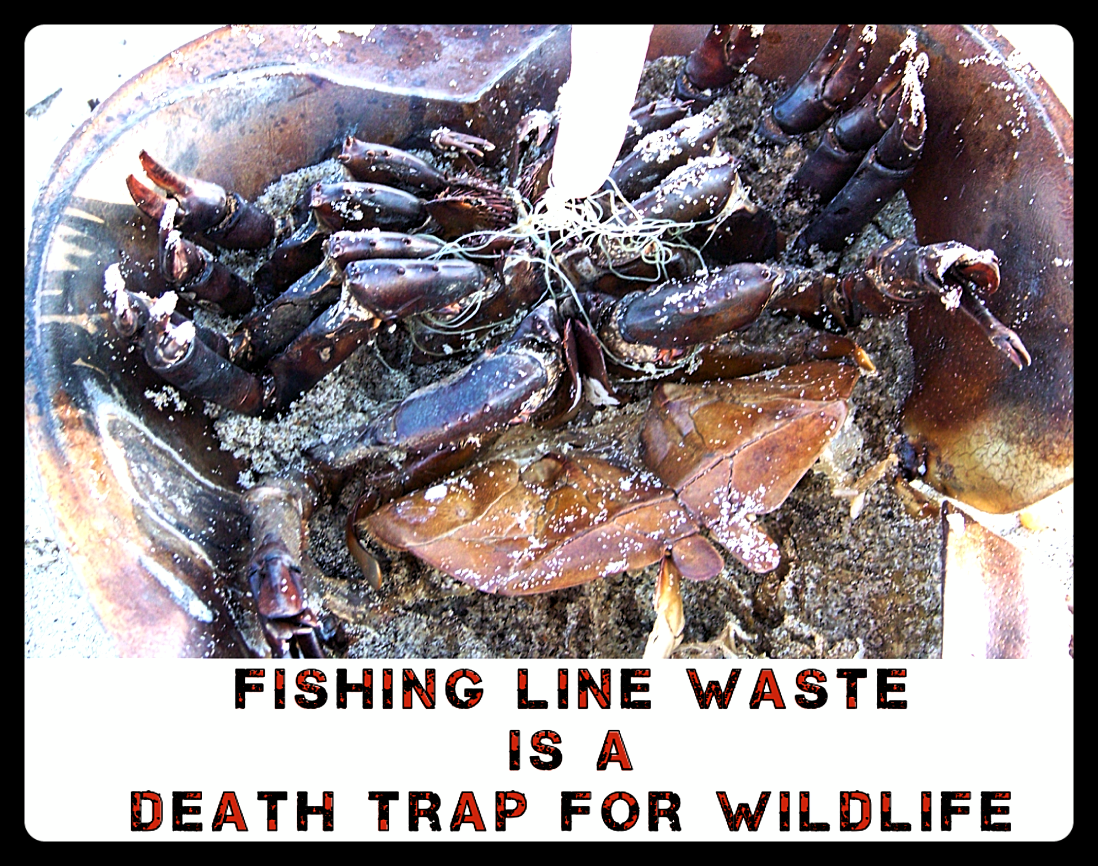 OLD FISHING LINE CAN KILL! - STOP ANIMALS FROM ANOTHER USELESS DEATH!