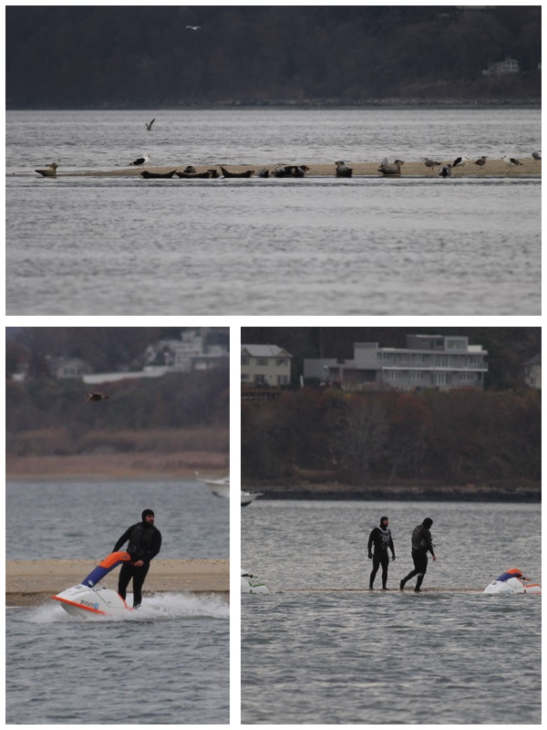 People on Jet Skis scare away a large group of seals resting on a sand bar in Sandy Hook Bay, New Jersey