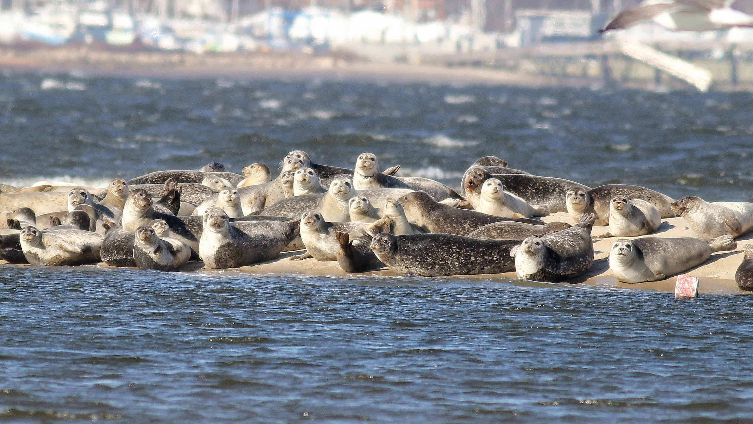 SANDY HOOK BAY, NJ - SAVE SEALS FROM HARASSMENT!
