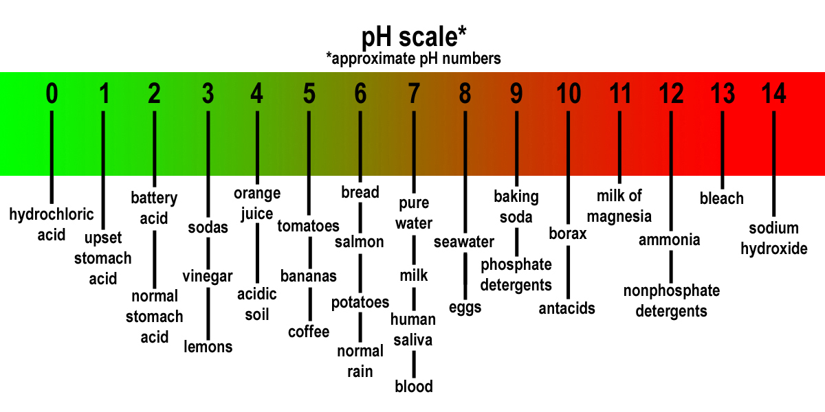 """The word pH is derived from """"power of hydrogen"""" and was first used in 1909 by a biochemist of the name Soren Peter Lauritz Sorensen."""