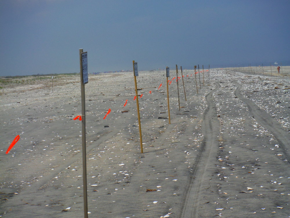 Rope fence in place to protect piping plover nesting habitat from people.