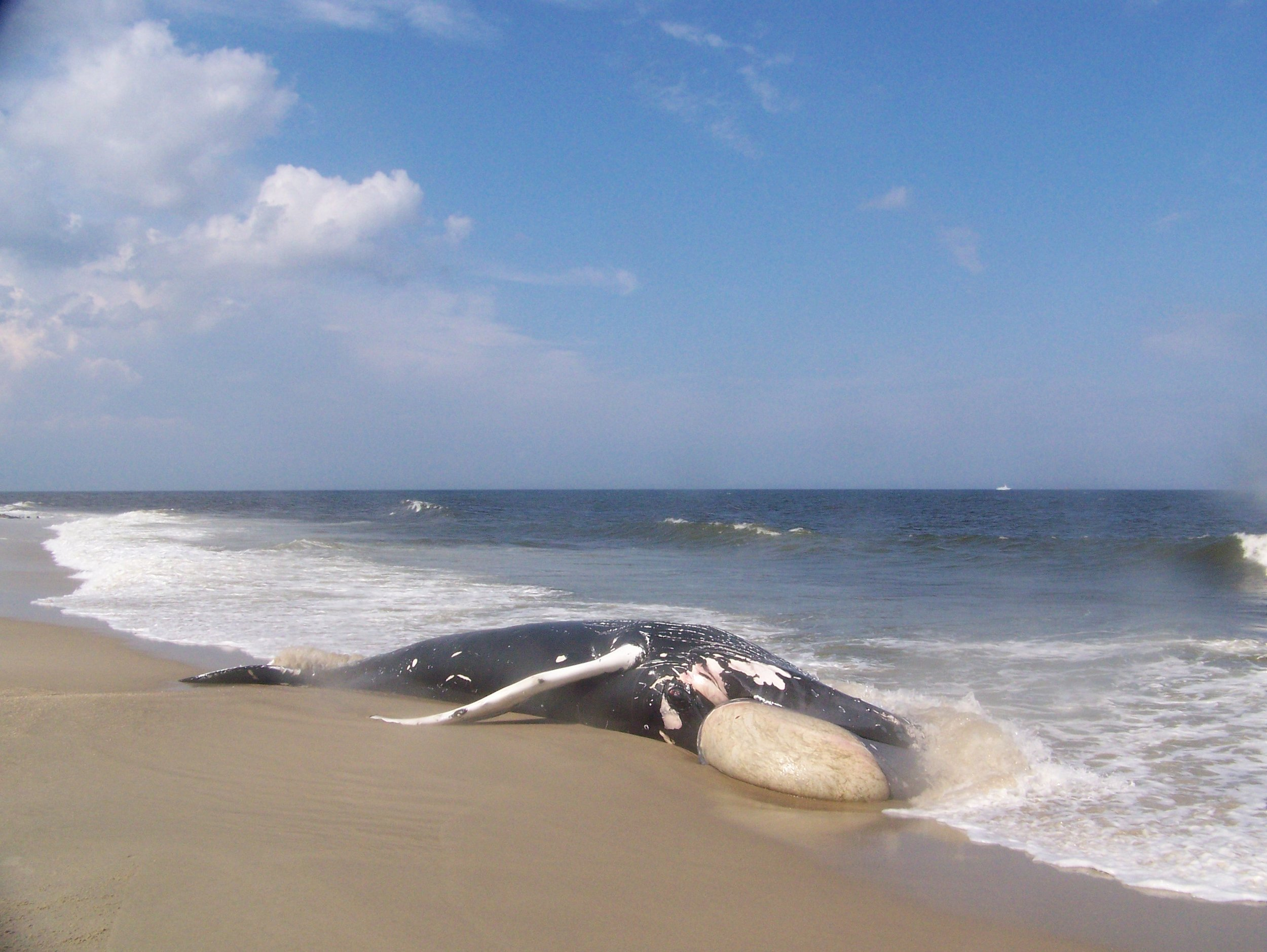 Save the Whales - Along the Jersey Shore