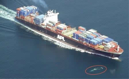 A near-miss between a whale and a container vessel. -