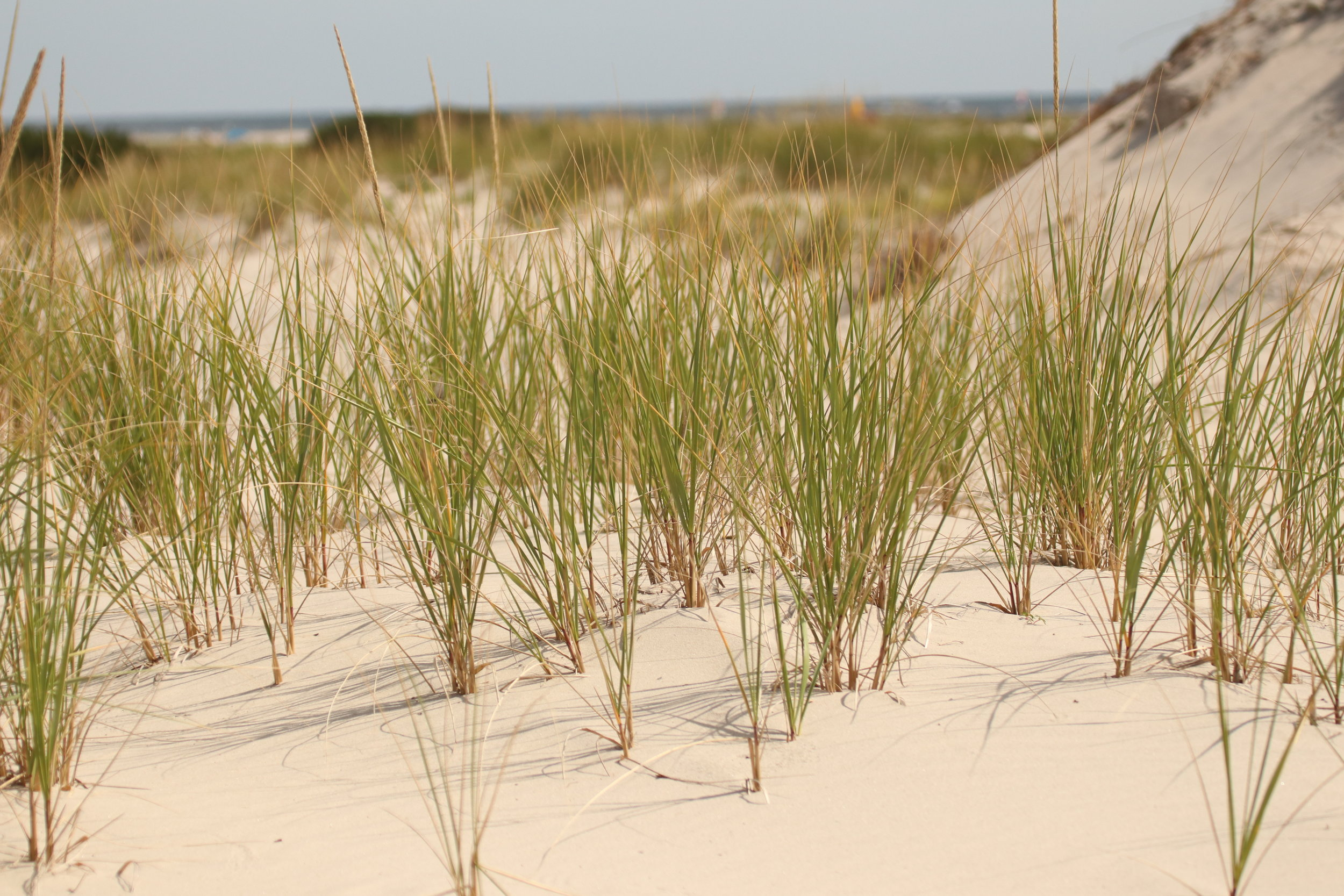 Volunteers Needed - Coastal Habitat Restoration