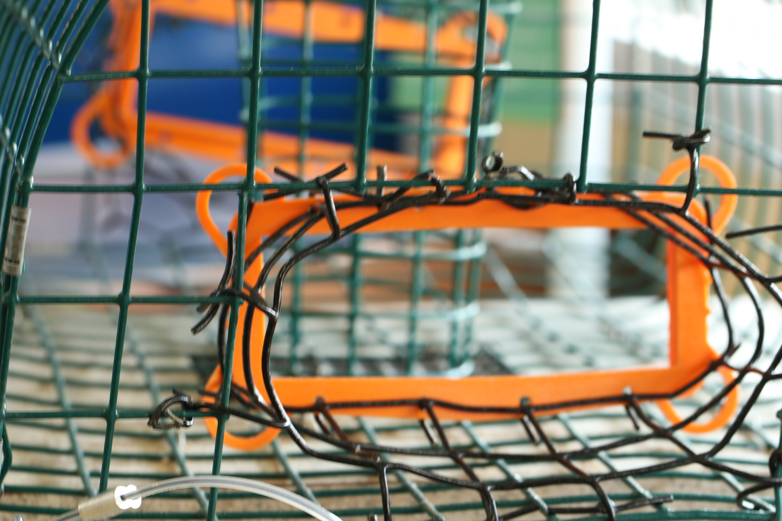 A Bycatch Reduction Device attached to a crab trap to help stop terrapins from entering into a trap and drowning.