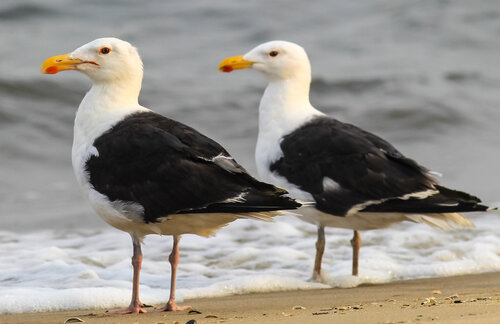 Have We All Missed The Point About Seagulls Save Coastal Wildlife