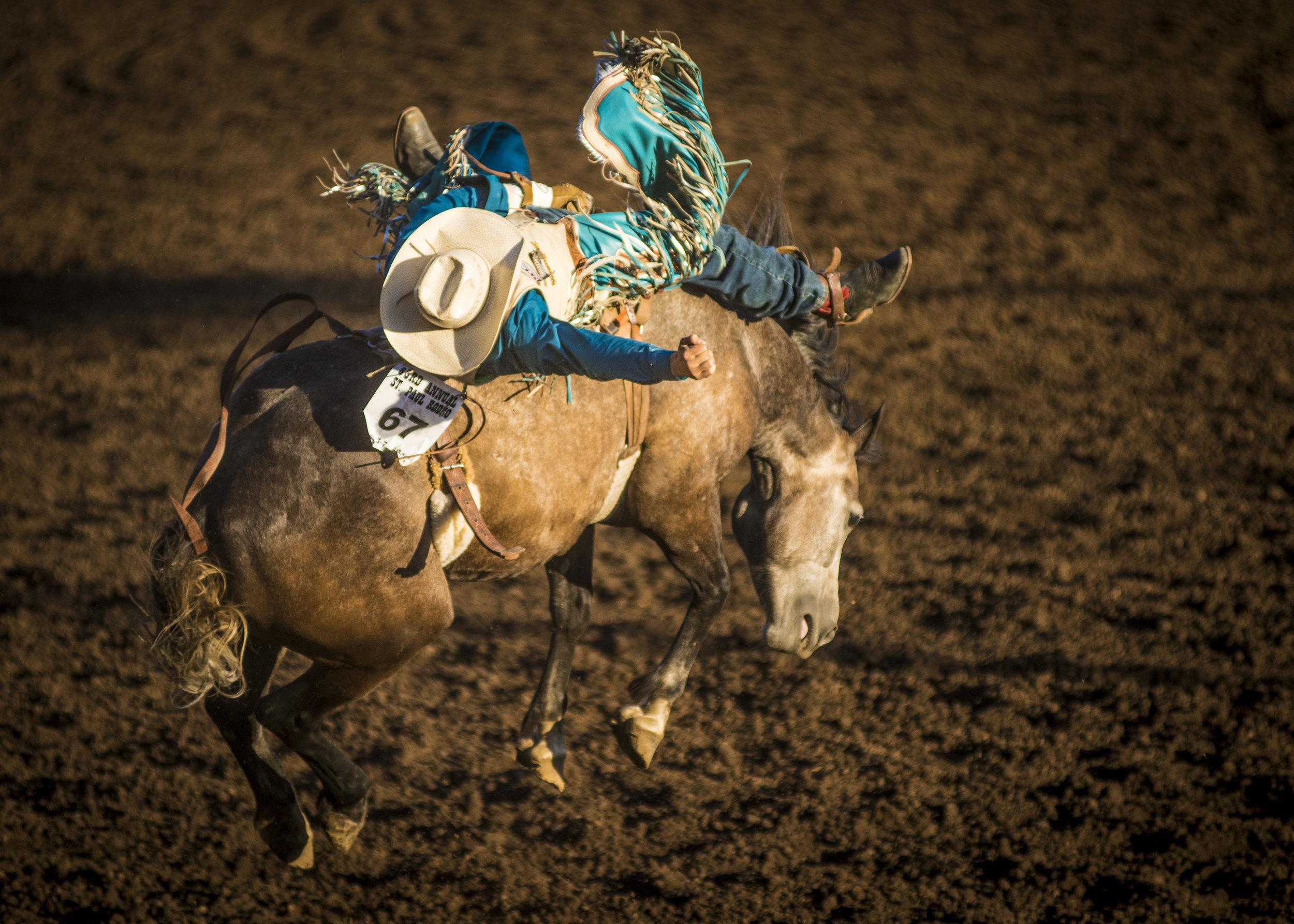St Paul Rodeo - Bronco Rider 1