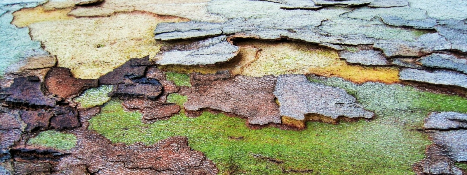 bark_patches_natural_organic_birch_environment_ecology_surface-1105940.jpg
