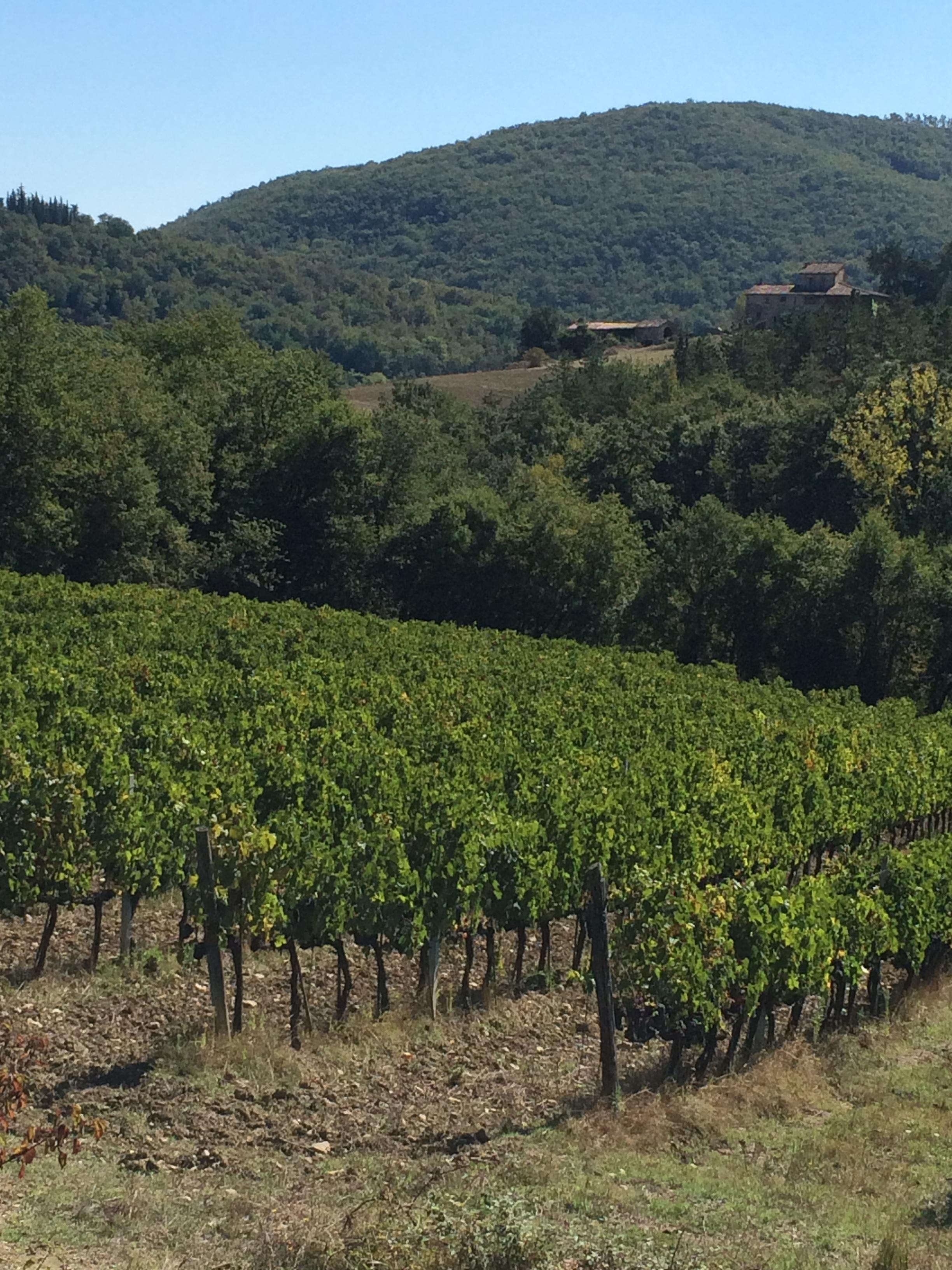 Tuscany IMG_1824.JPG