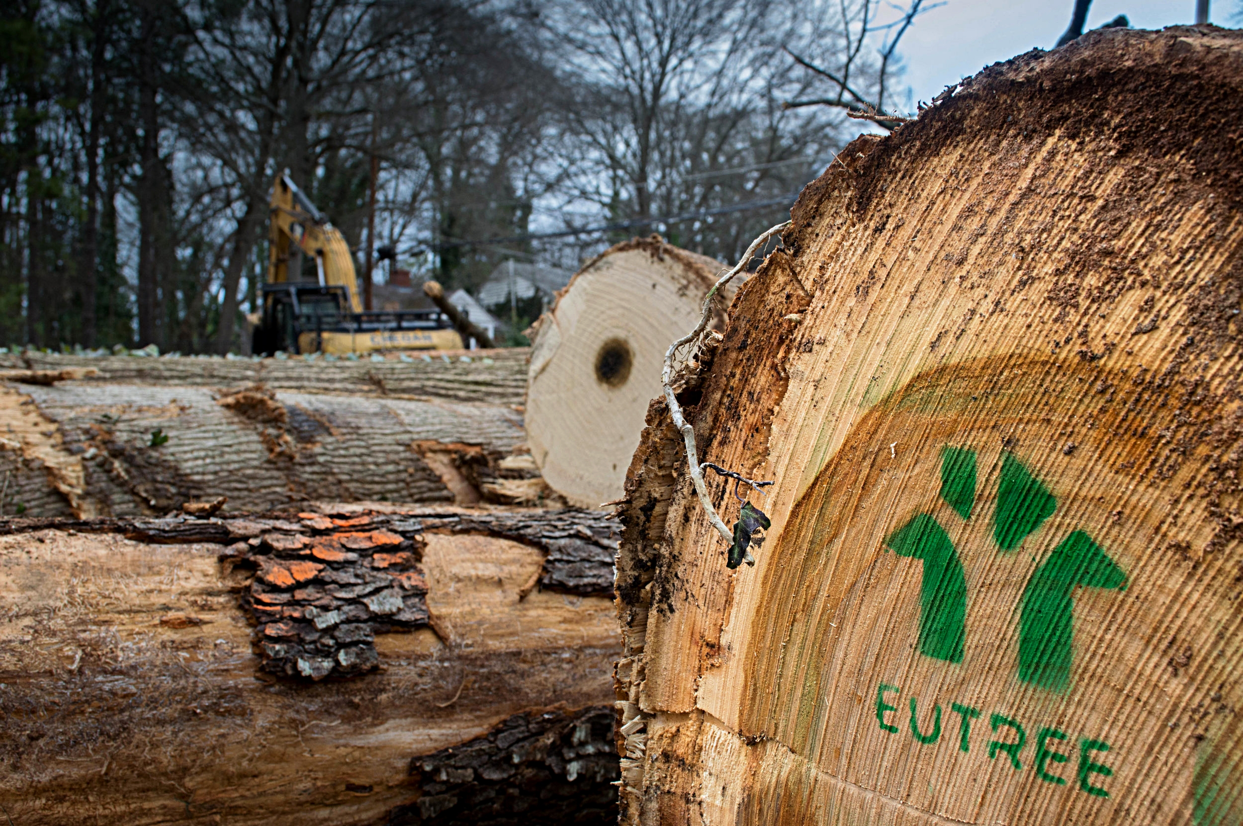 Logs selected to be sent to Eutree lumber yard