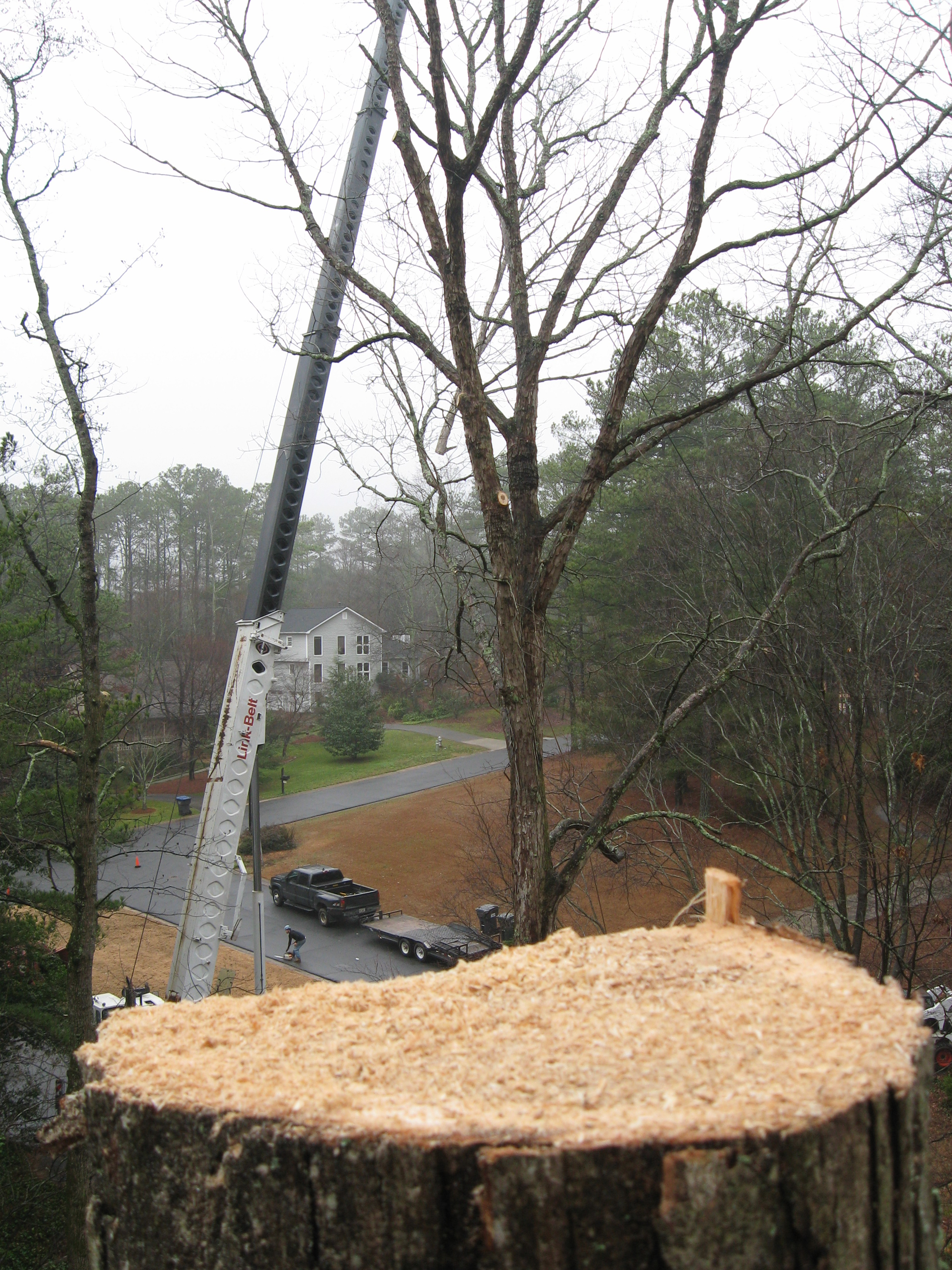 Local tree service is brought in to safely remove tree with crane.