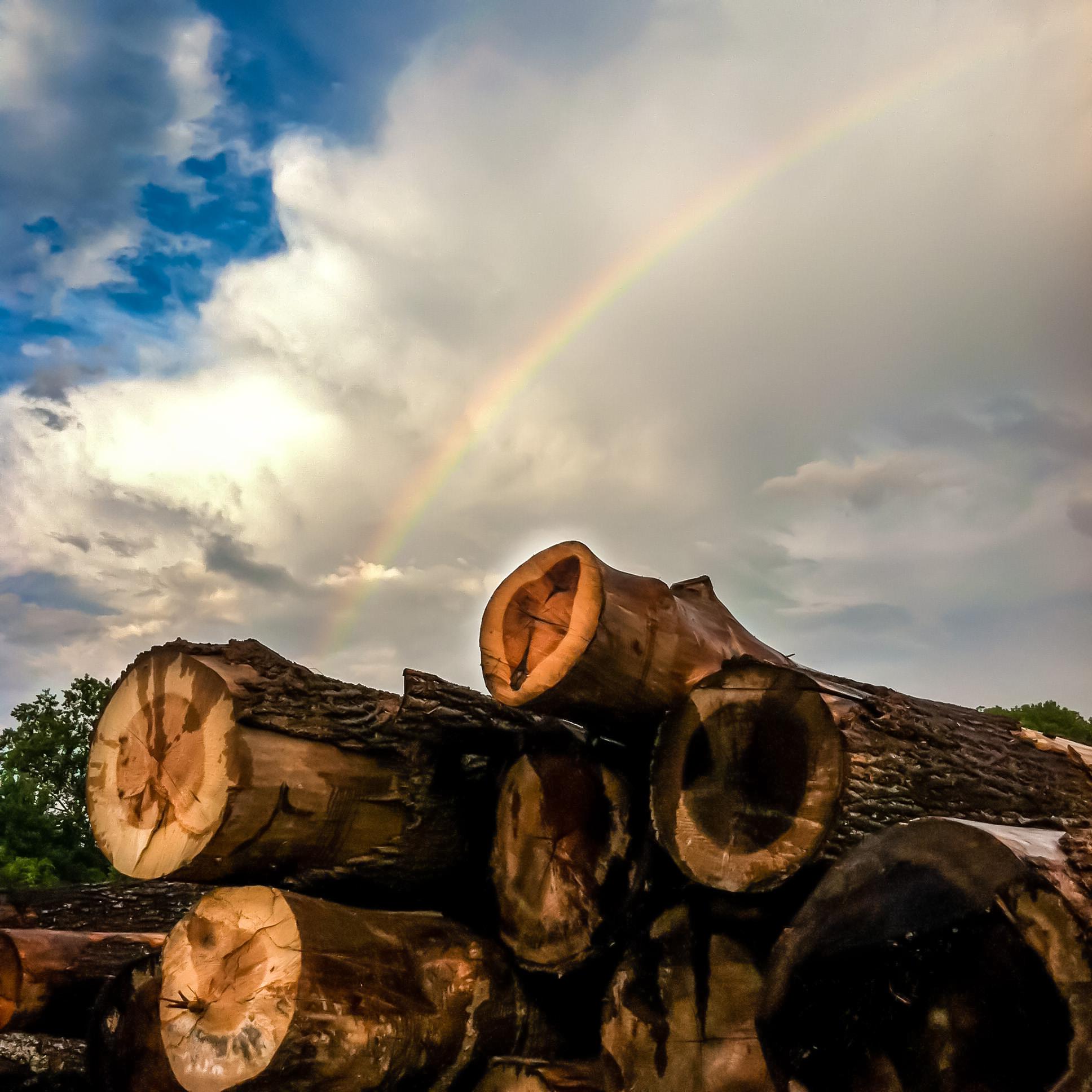 Eutree lumber yard
