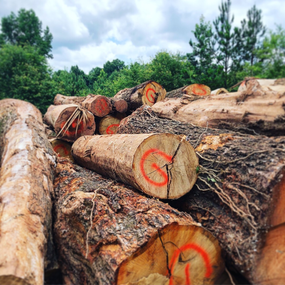Eutree collaborated with Madera Arts to provide a detailed inventory summary and recommendation to Gables design team for how best to maximize utilization of the potential lumber from each log.