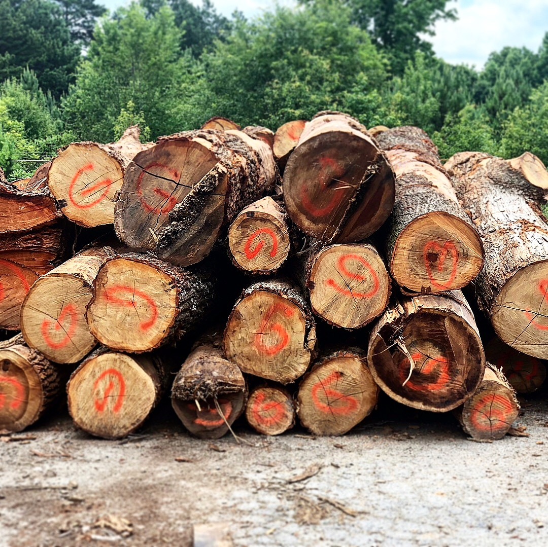While Gables design team worked on construction drawings for the development, Eutree began to plan for use and milling of the timber from these logs.
