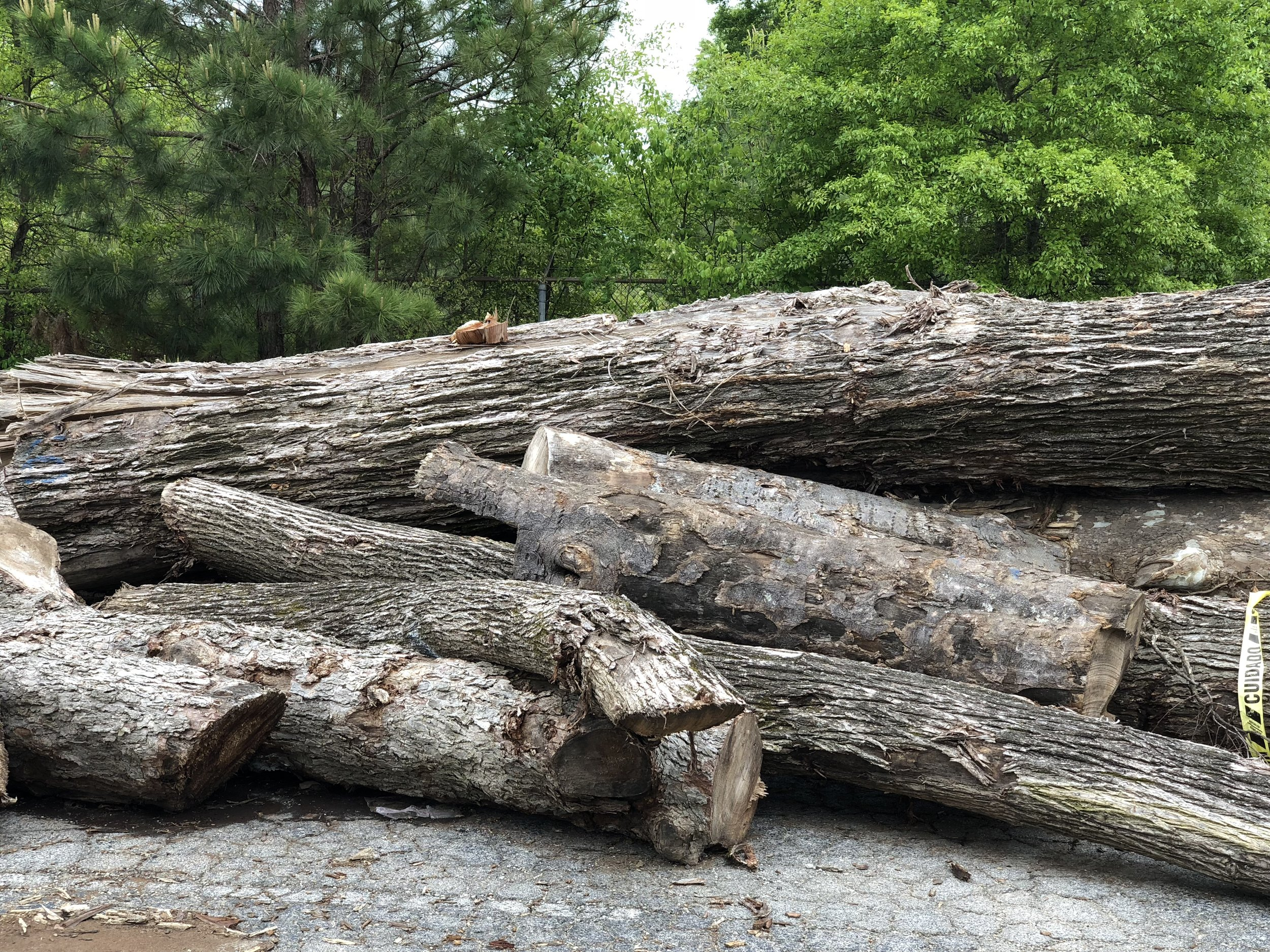 Eutree's lumber specialists are able to provide detailed recommendations and estimated board feet each log will yield for live edge slabs, flooring, paneling, beams or dimensional lumber.