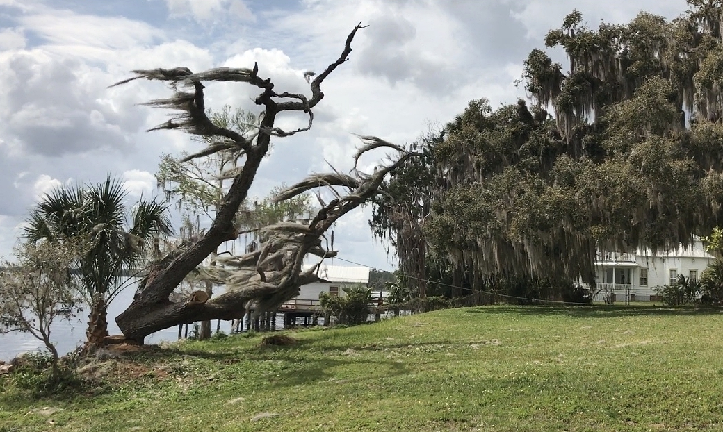 Once the larger branches were removed and the tree was properly secured by rope, it was felled into the yard safely away from the sea wall and dock.