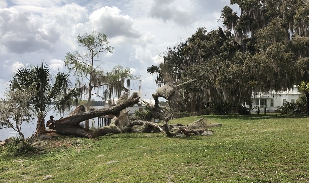 The tree was sawed into pieces and removed from the yard, while the trunk of the tree was salvaged and transported to Eutree's facility to preserve into slabs for future furniture items for the family.