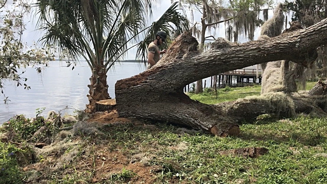 While the landscape of the property will be forever changed by the removal of this historic tree, its timber will get a second life memorialized for future generations.