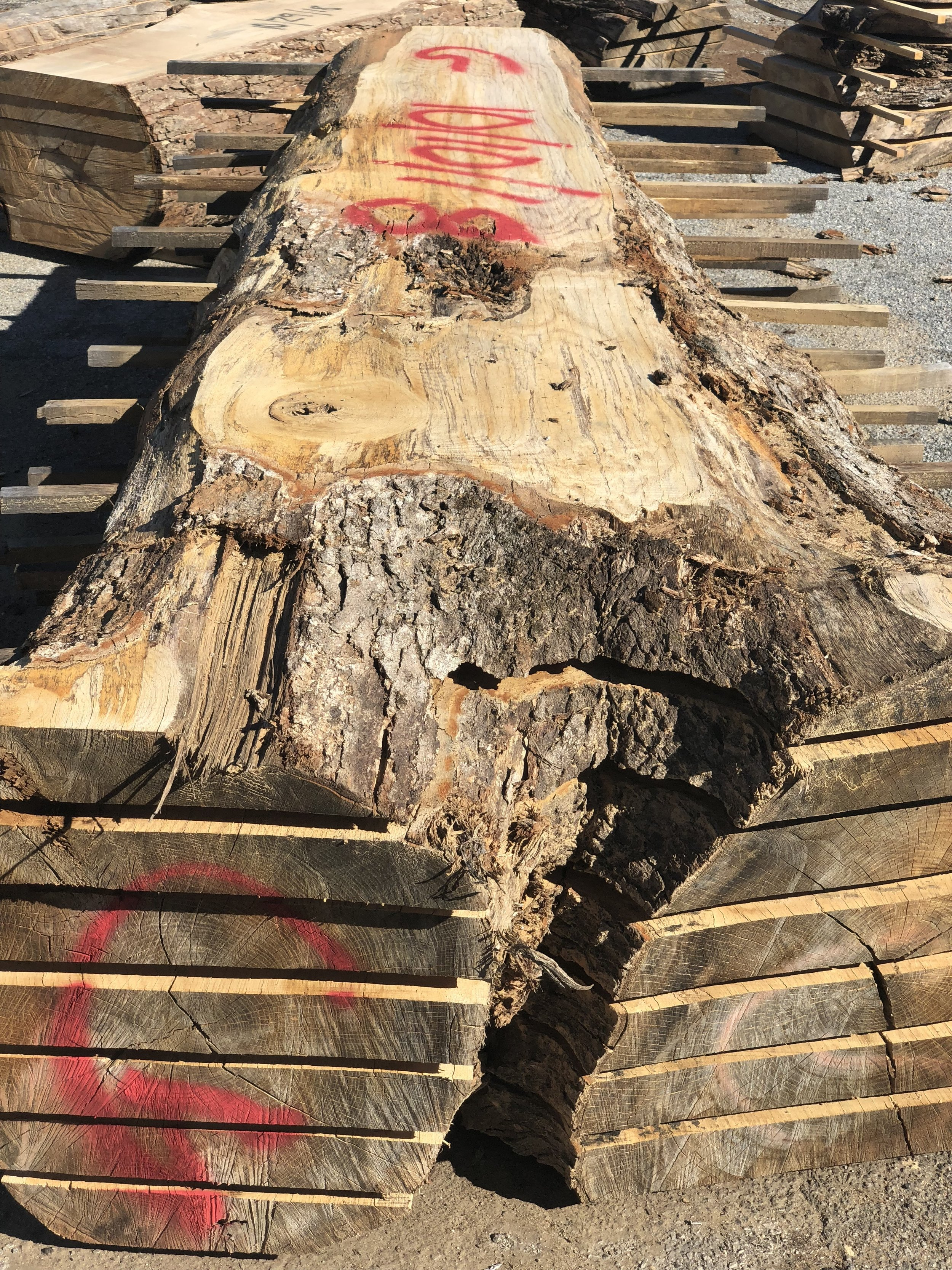 Logs sawed into slabs for tables, countertops and benches are stacked, stickered and labeled.