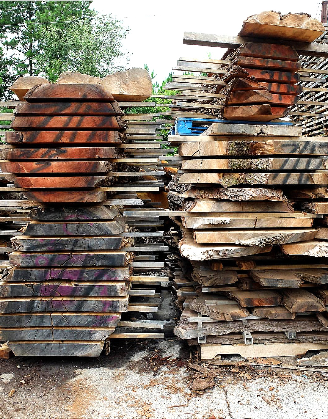 Slabs are slowly air dried in the Eutree lumberyard for 12-18 months prior to entering the kilns.