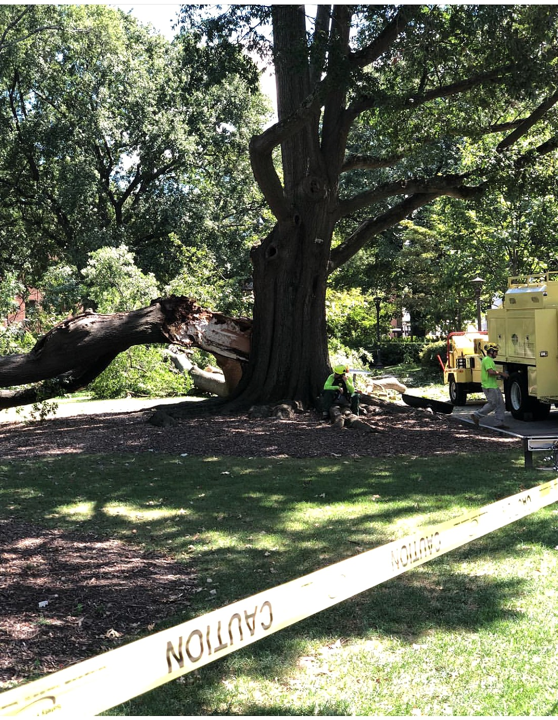 Eutree worked with local expert arborist at Boutte Tree to safely remove and salvage the timber from the tree.