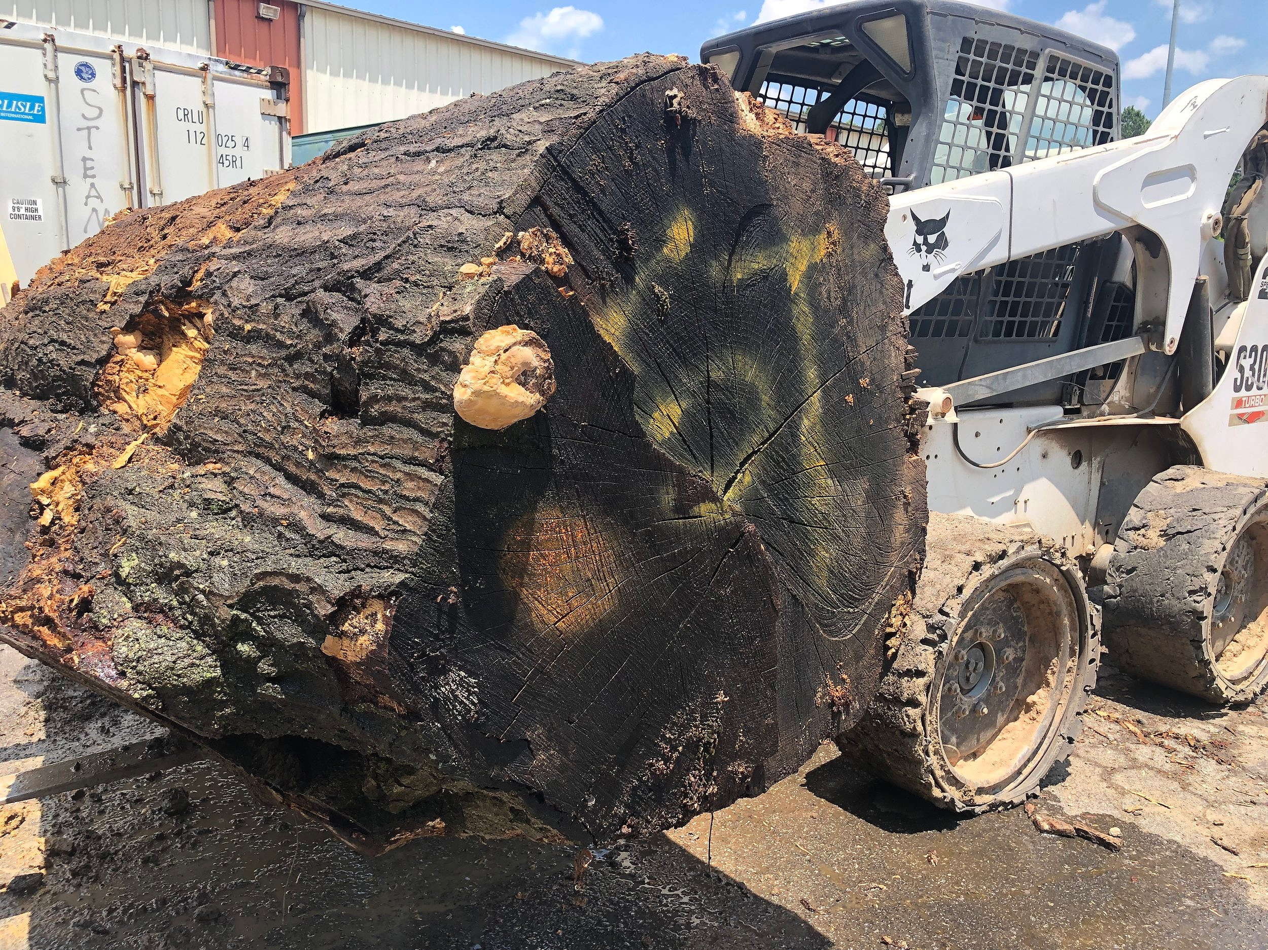Logs are loaded individually onto the Wood-Mizer 1000 sawmill operating a Bobcat.