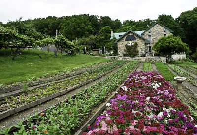 Sweet William flowers with farmhouse .jpg