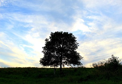 - THE BIG TREE, a healthy oak. This tree overlooks our farm at the top of the hill-- we planted this oak as a small sapling back in the spring of 2002, months after our son Arias passed from this world at the age of 24. Our hearts were broken. The loss of a child is intense, indescribable; it changes how we feel it and understand it as time moves along. Arias was just 11 months old when we moved to the farm in western Perry county; he was with us as we farmed and worked hard to learn our craft. He is such a big part of who we are and where we are now.All life is precious - Terra Brownback