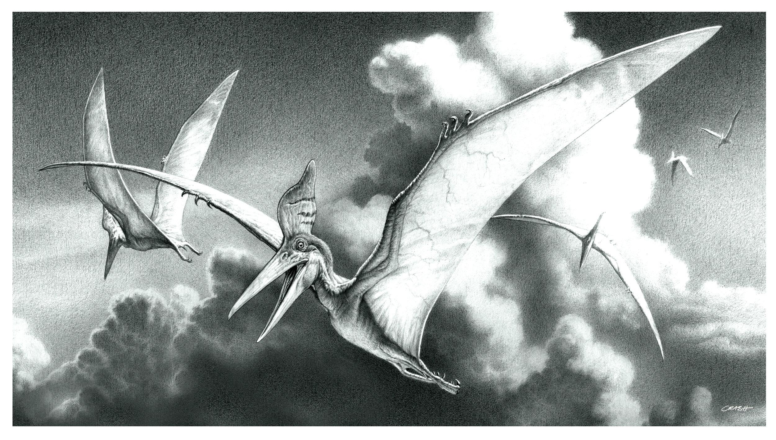 Pteranodon.jpg