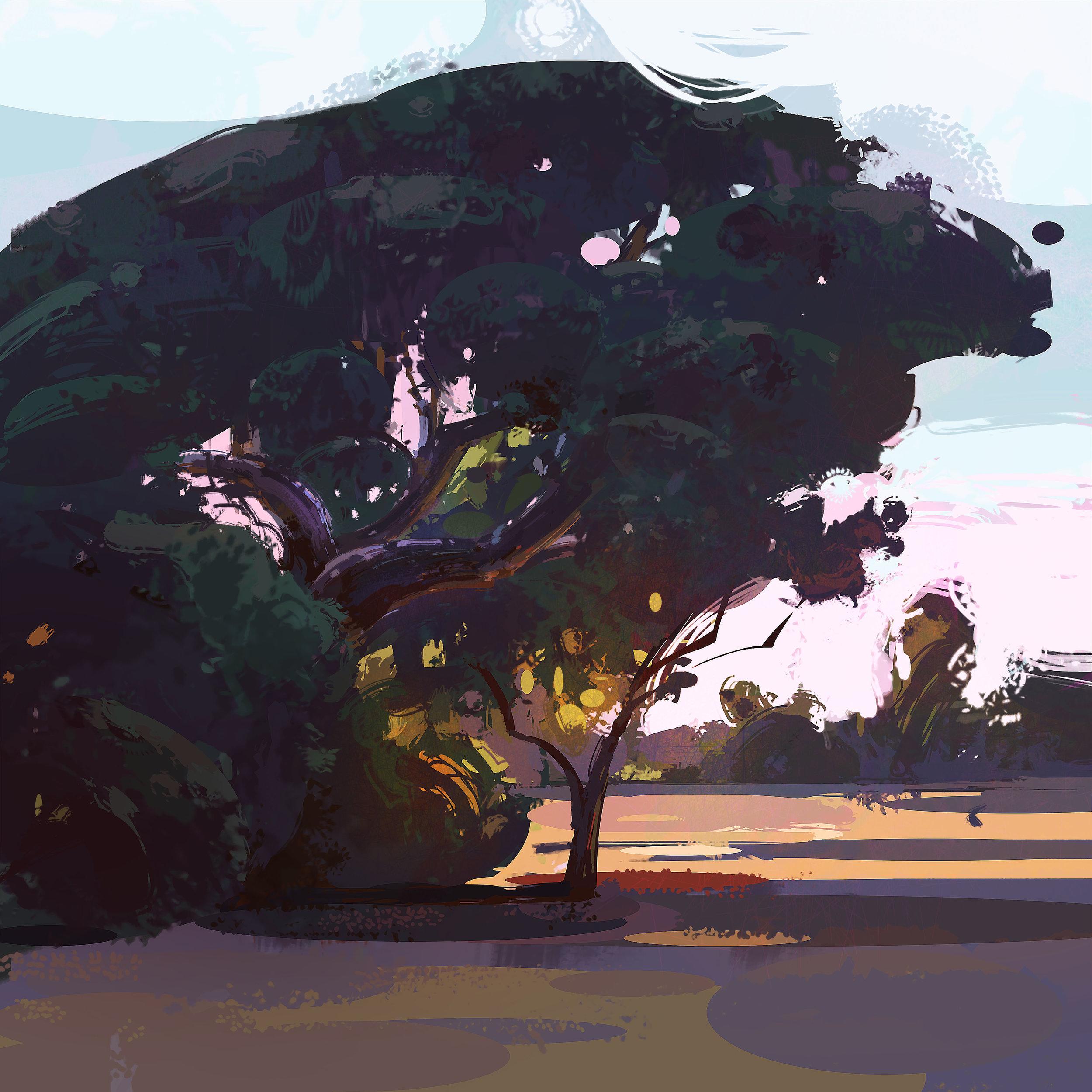 tree_study_loscarneros_6.jpg