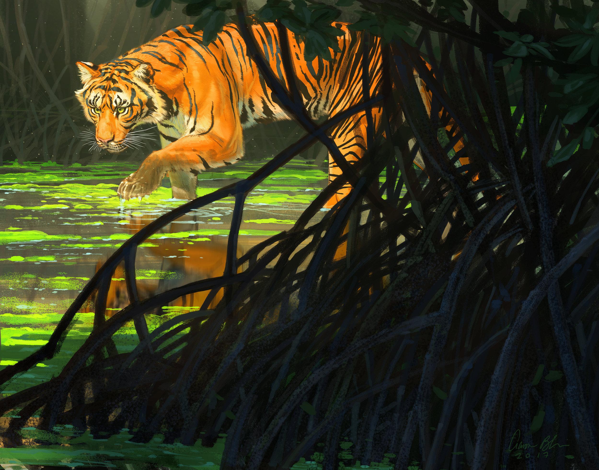 Bengal Tiger 2017 11 x 14.jpg