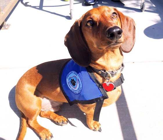 Miner soaking up the sun and looking spiffy in his official therapy vest.