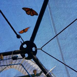 Butterfly Dome - Miami, FL