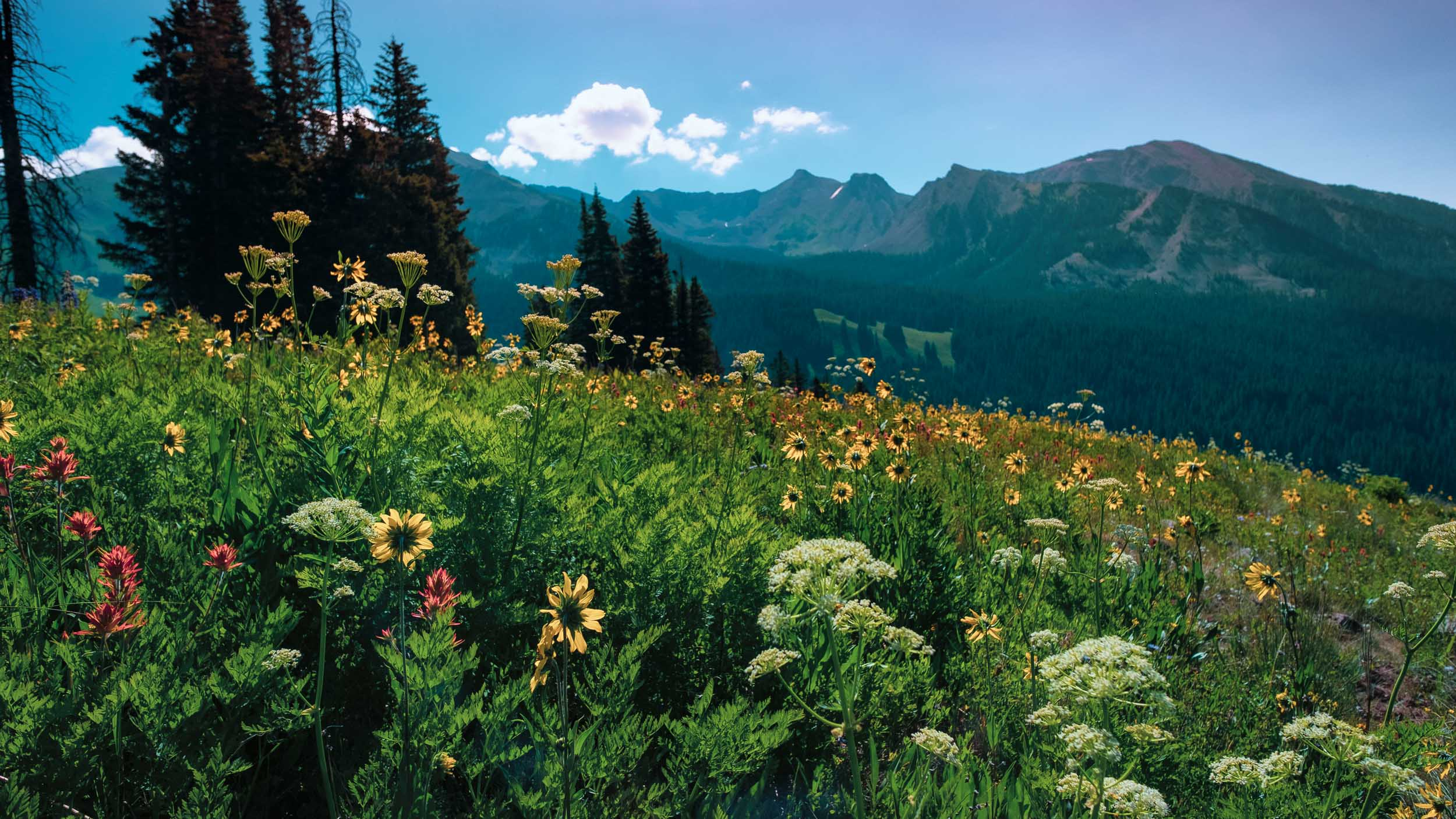 Wildflowers along Rustler's Gulch - Fuji XT2, 14mm f/2.8
