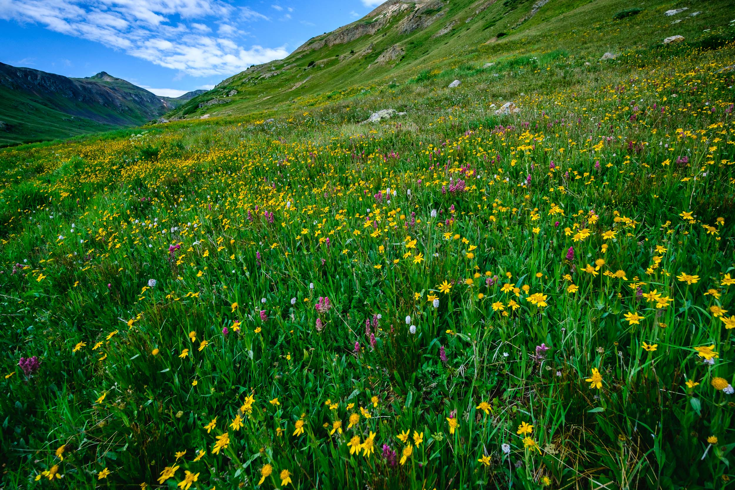 Placer Gulch Wildflowers