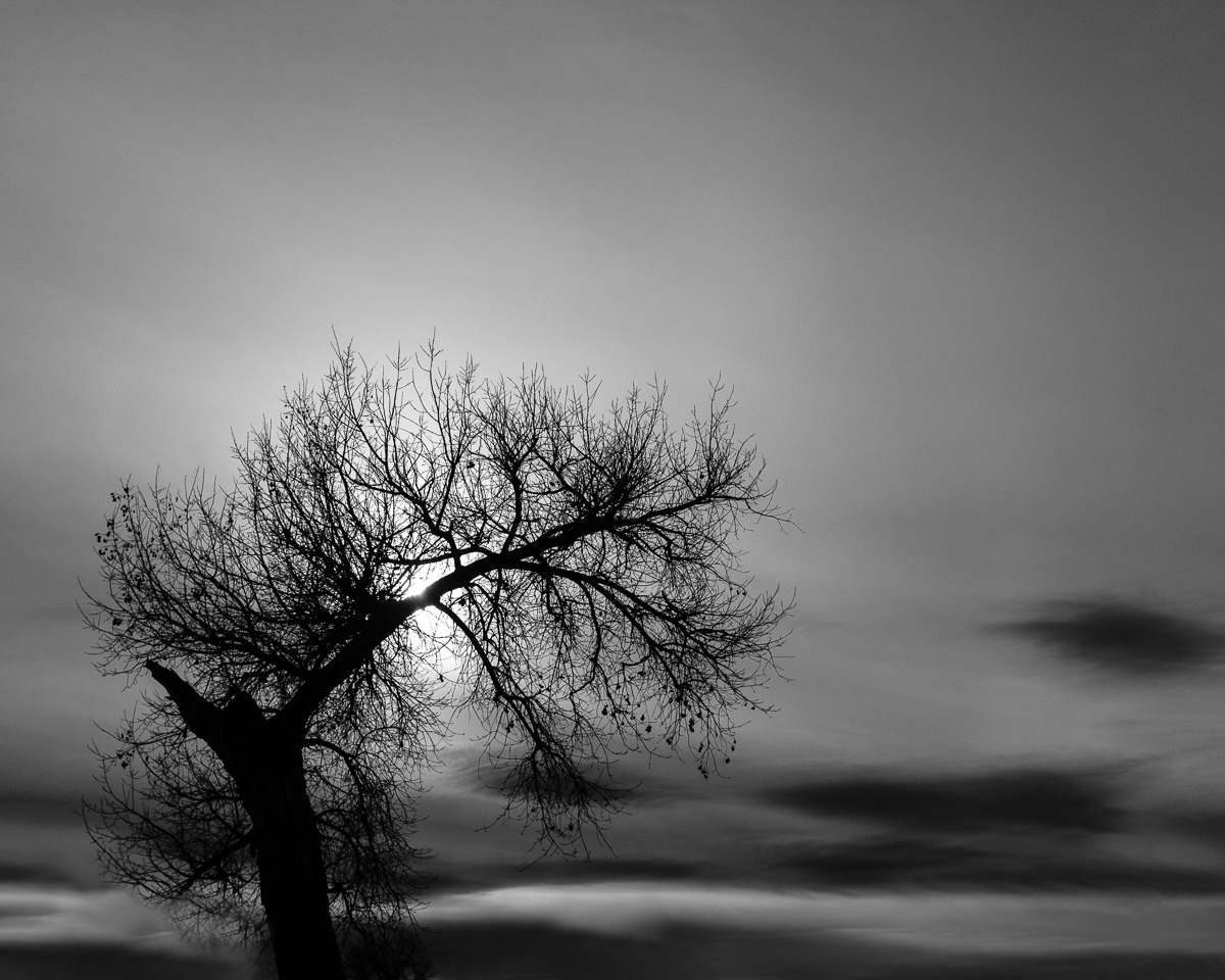 Day 8 - 365 Day B&W Photo Challenge - A cottonwood trees remains victorious over winter as it's backlit by the afternoon sun.- Fuji X100F - Acros R Film Simulation