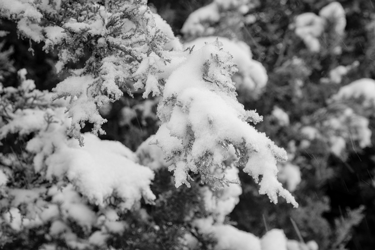 Day 14 - 365 Day B&W Photo Challenge - A Blanket of snow covered the area yesterday - Fuji XT-2, XF 50-140mm f/2.8, Acros R Film Simulation