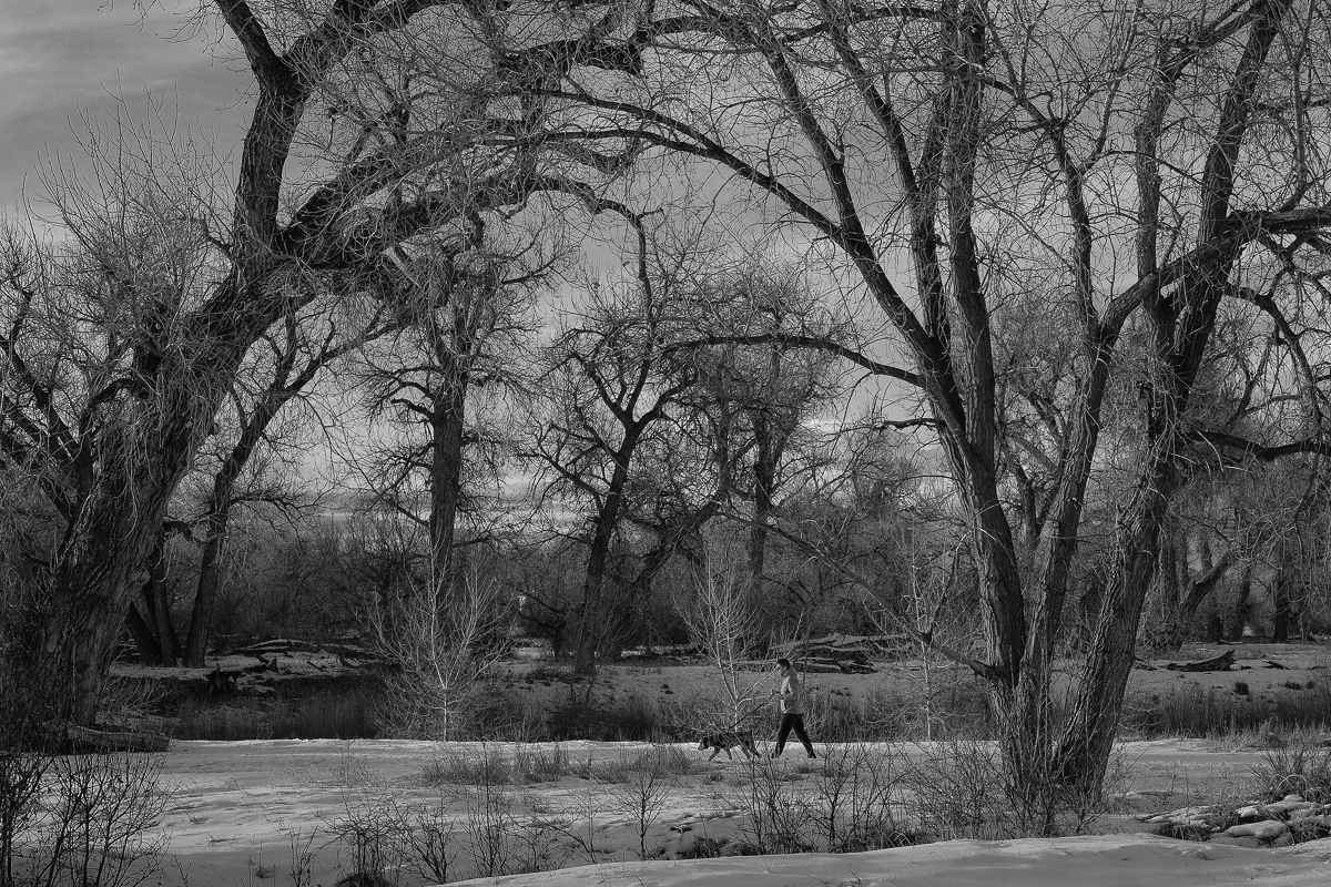 Day 18 - 365 Day B&W Challenge - Man out for a winter's day walk with his dog. Fuji XT2, XF 35mm f/2, Acros R Film Simulation