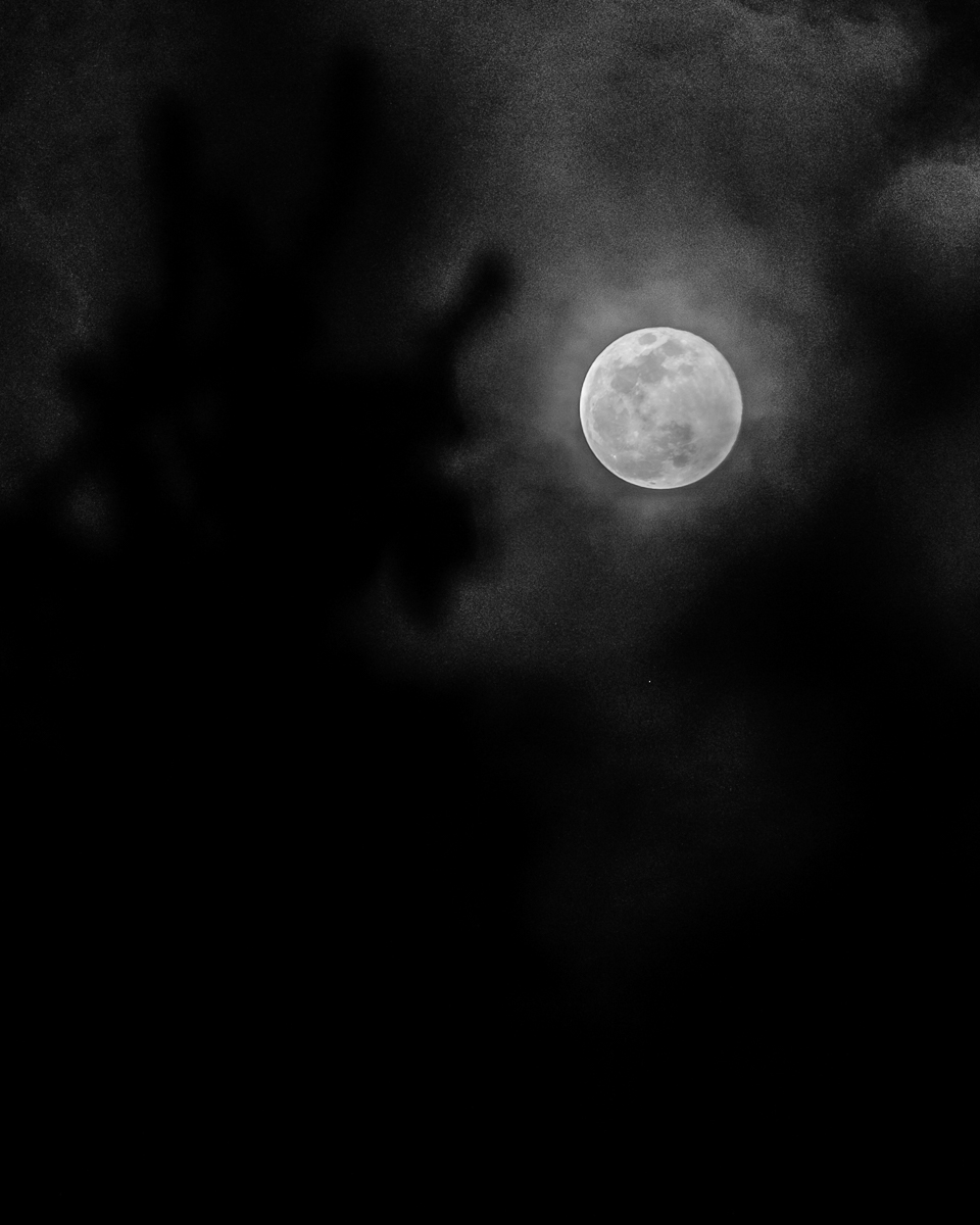 Day 53 - 365 Day B&W Photo Challenge - Winter's Full Moon shot handheld through the trees on a partly cloudy night - Fuji XT-3, XF50-140mm f/2.8, Acros R Film Simulation