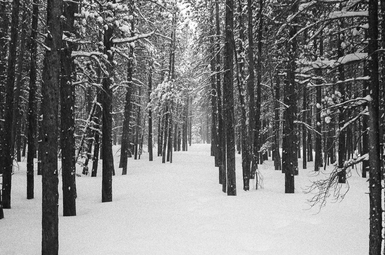 Fresh virgin snow covers the Boulder Brook Trail